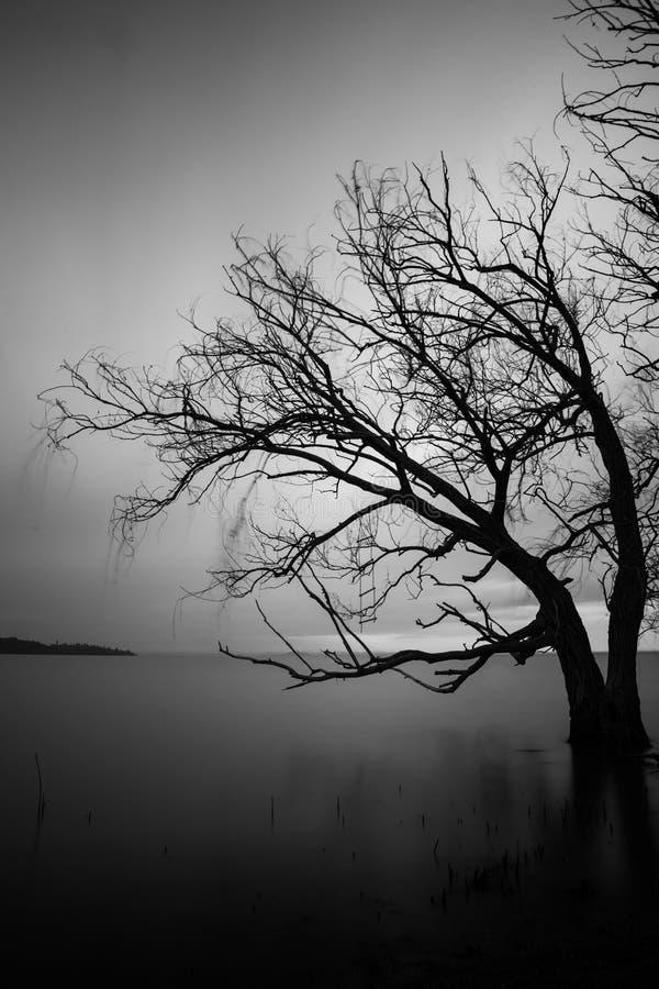 Дерево над неподвижным озером стоковое фото