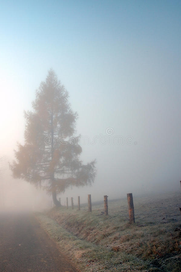 Дерево на дороге в тумане стоковое фото rf