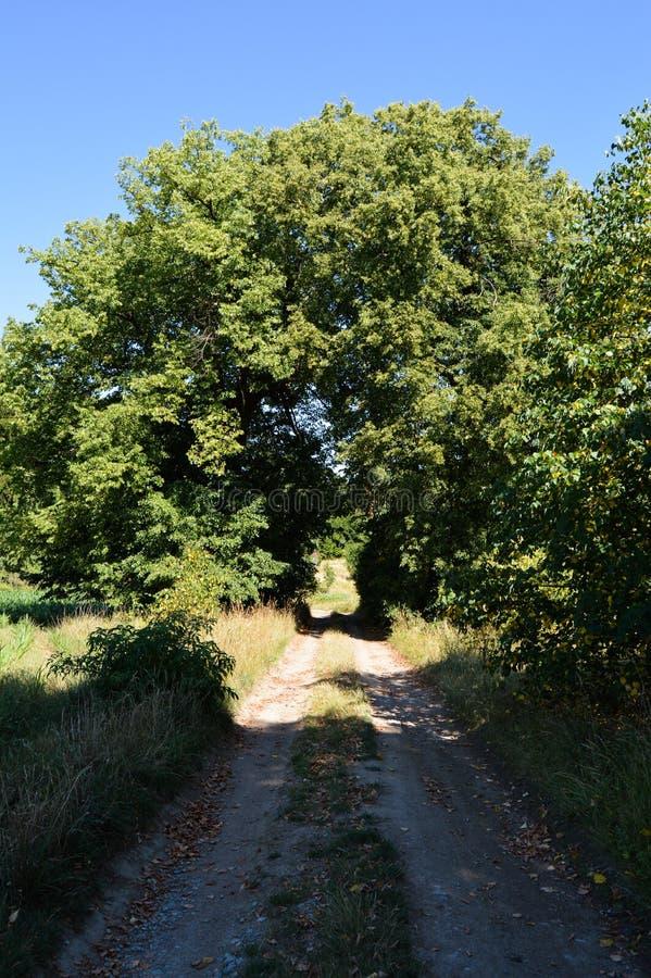 Дерево на дороге стоковое изображение rf
