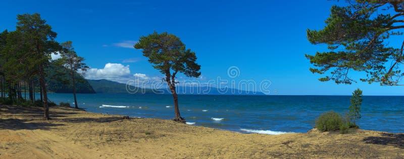 Дерево на песочном побережье Lake Baikal стоковые изображения