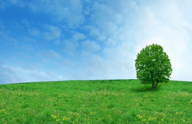 Дерево на поле стоковое фото rf