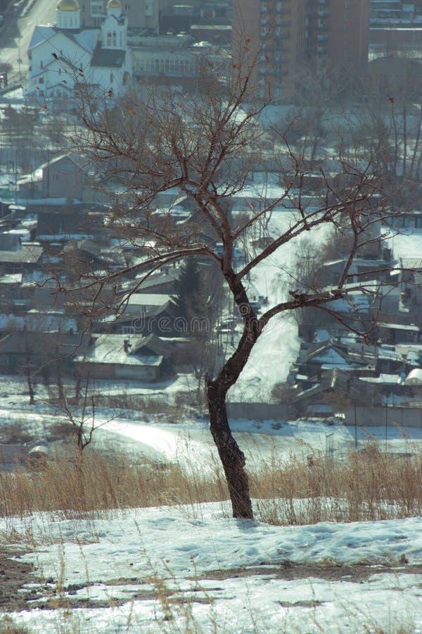 Дерево города стоковое изображение