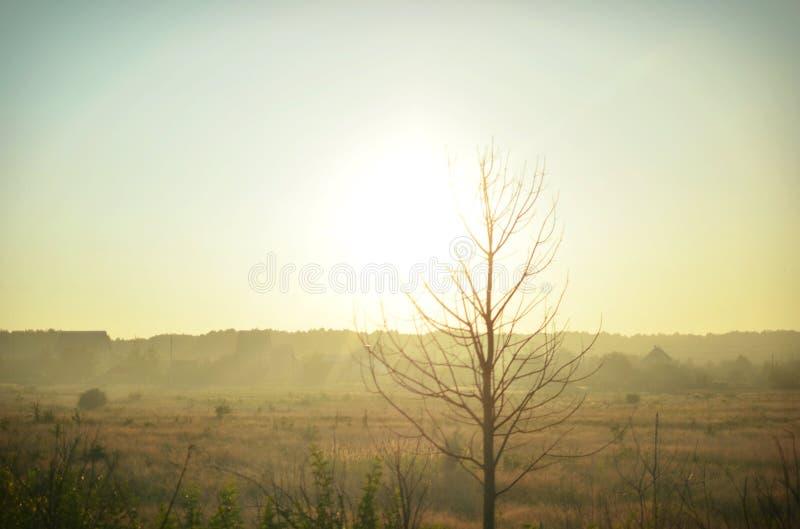 Дерево на предпосылке полей перед причаливая заходом солнца стоковые фото