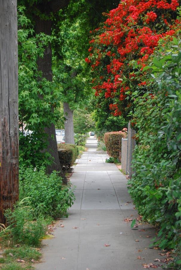 Дерево на пути прогулки стоковые фотографии rf