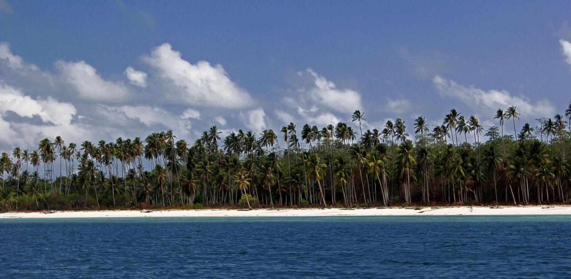 Дерево на пляже стоковое фото rf