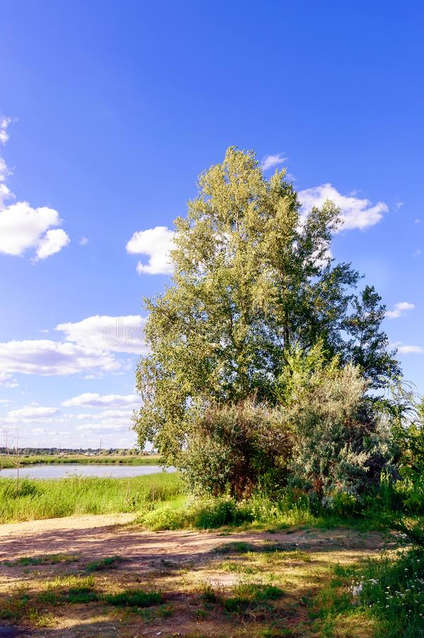 Дерево на речном береге стоковое изображение