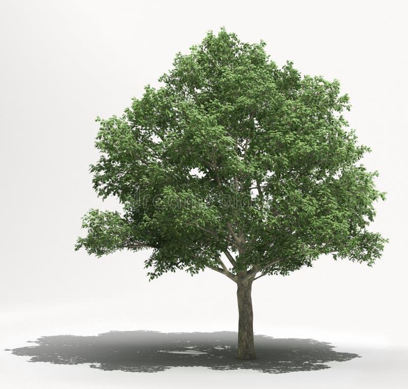 Дерево на светлой предпосылке стоковые изображения