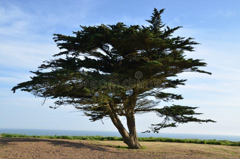 Дерево на скале стоковые изображения rf