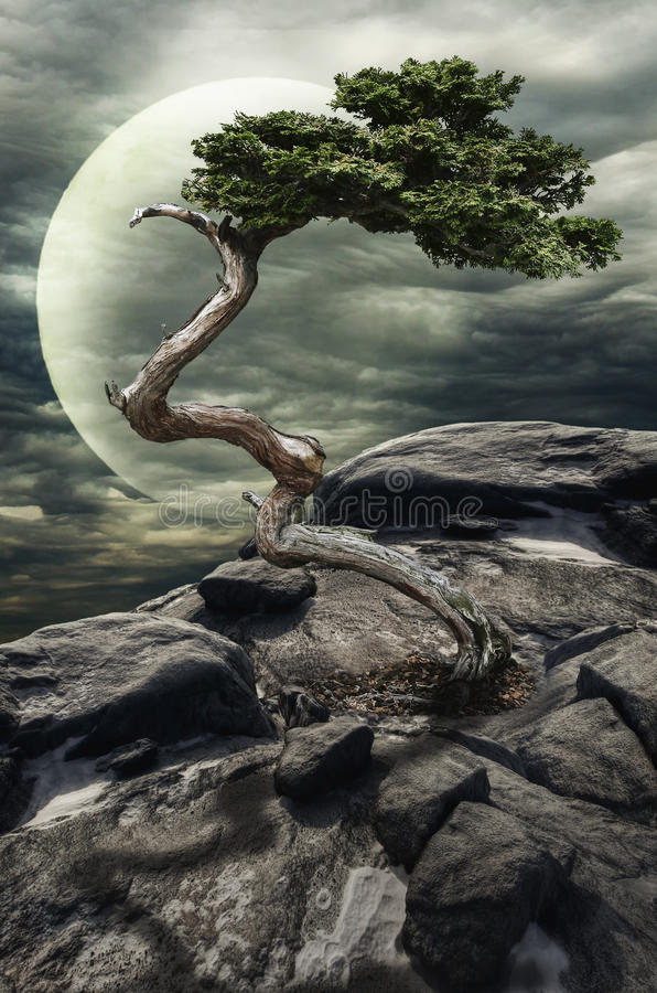 Дерево на скале бесплатная иллюстрация