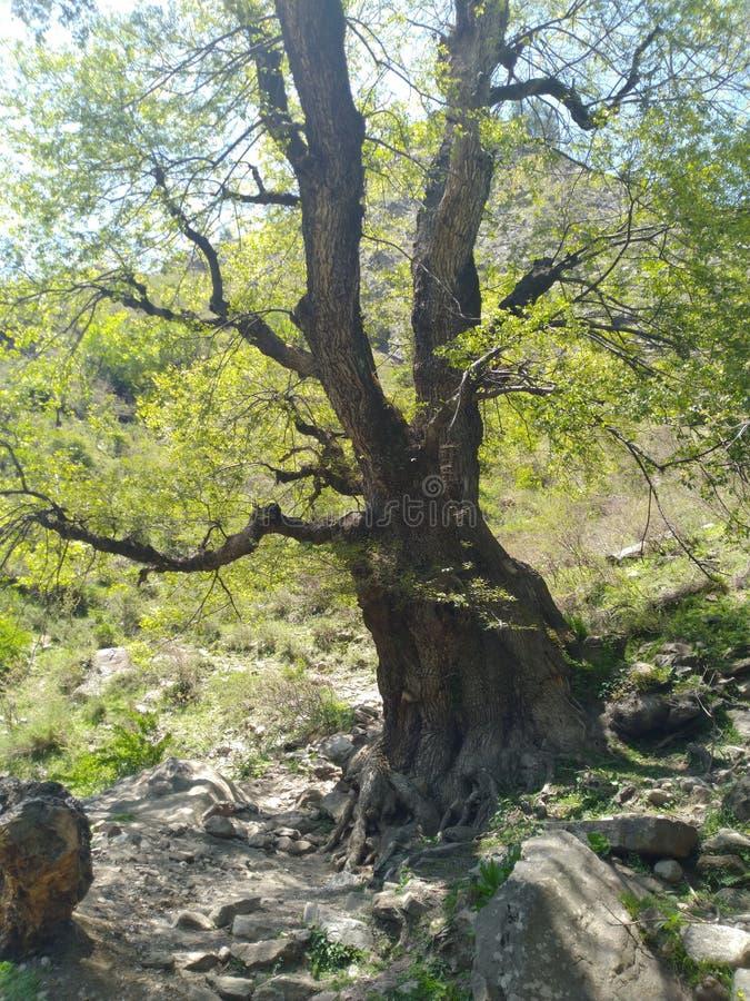 Дерево на холме стоковая фотография