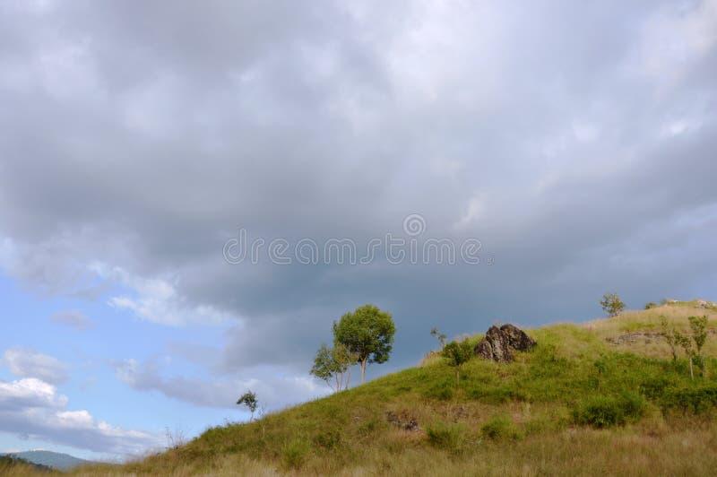 Дерево на холме на горе Khao Lon в Таиланде стоковые фото