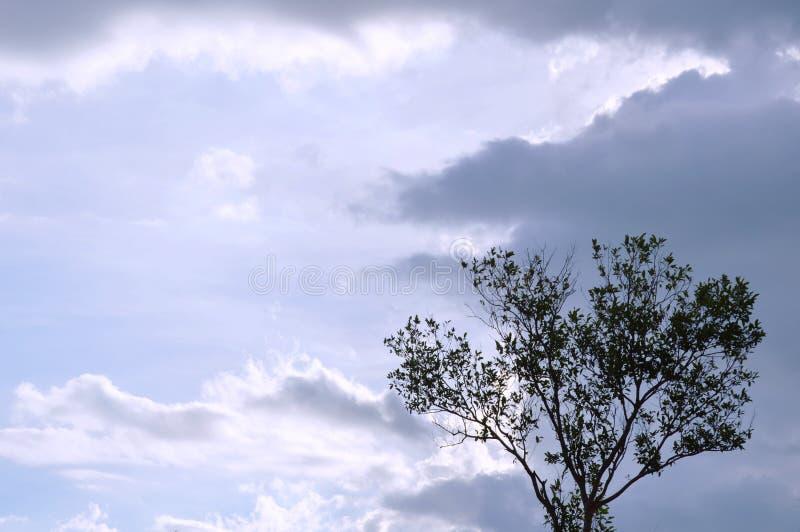 Дерево на холме на горе Khao Lon в Таиланде стоковые фотографии rf