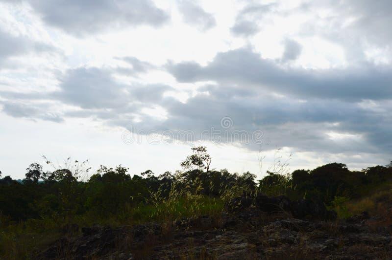 Дерево на холме на горе Khao Lon в Таиланде стоковое изображение rf