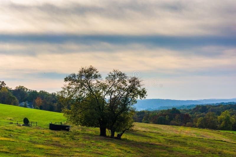 Дерево на холме в сельском Lancaster County, Пенсильвании стоковые фотографии rf