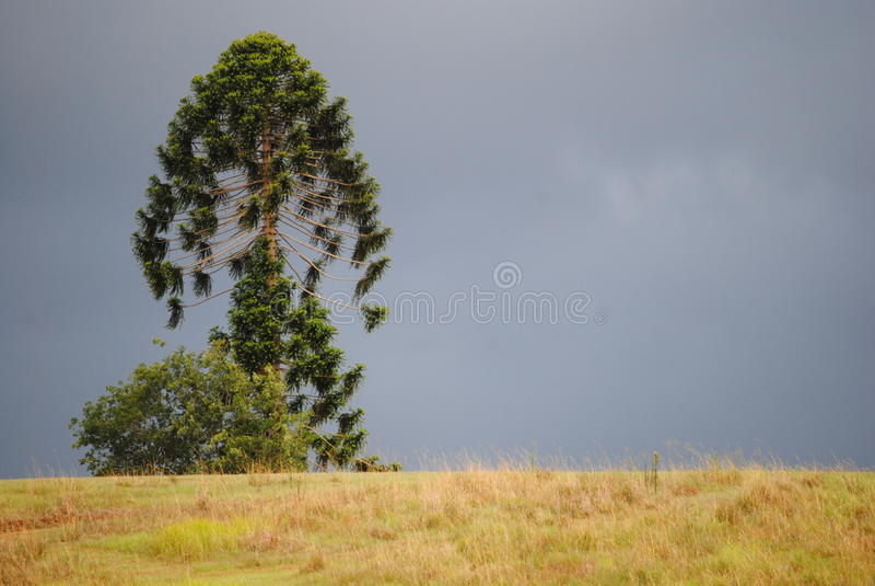 Дерево на холме стоковые изображения rf