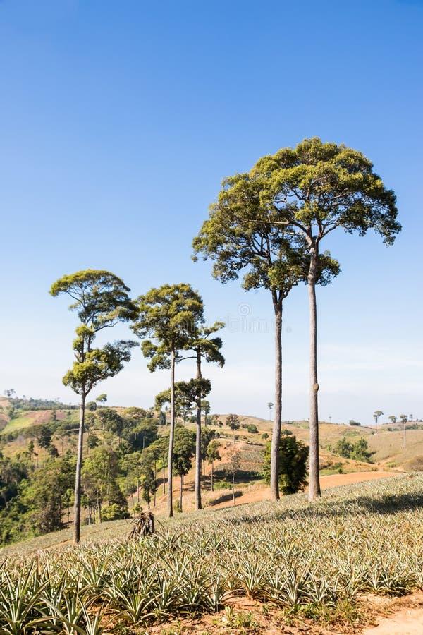 Дерево на холме стоковое фото rf