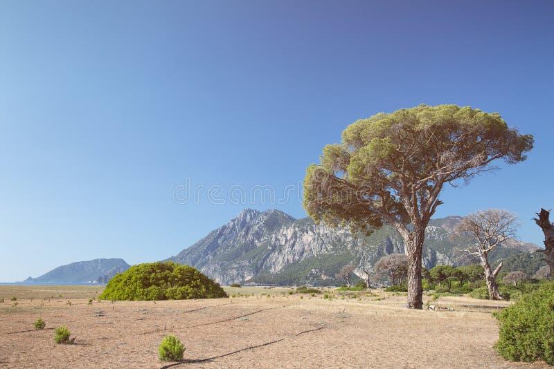 Дерево на seashore стоковая фотография