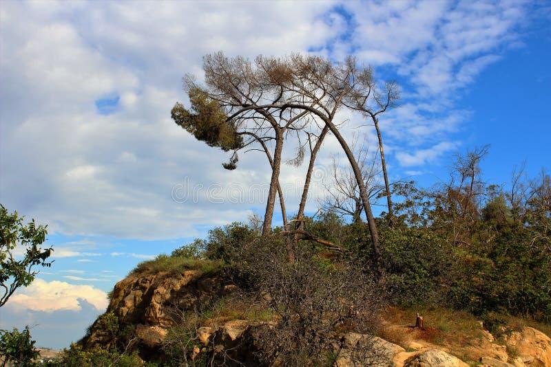 Дерево неба стоковые изображения rf