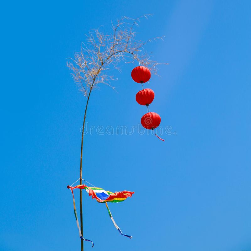Дерево Нового Года во Вьетнаме с красным фонариком стоковые фото