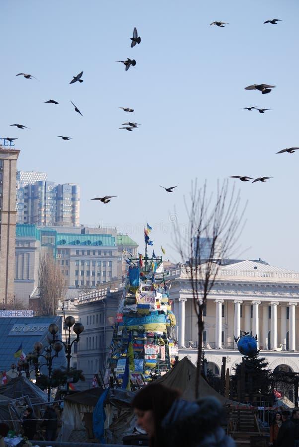 Дерево Нового Года на Maidan стоковые фото