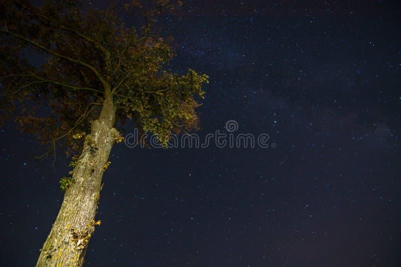 Дерево ночи стоковая фотография rf