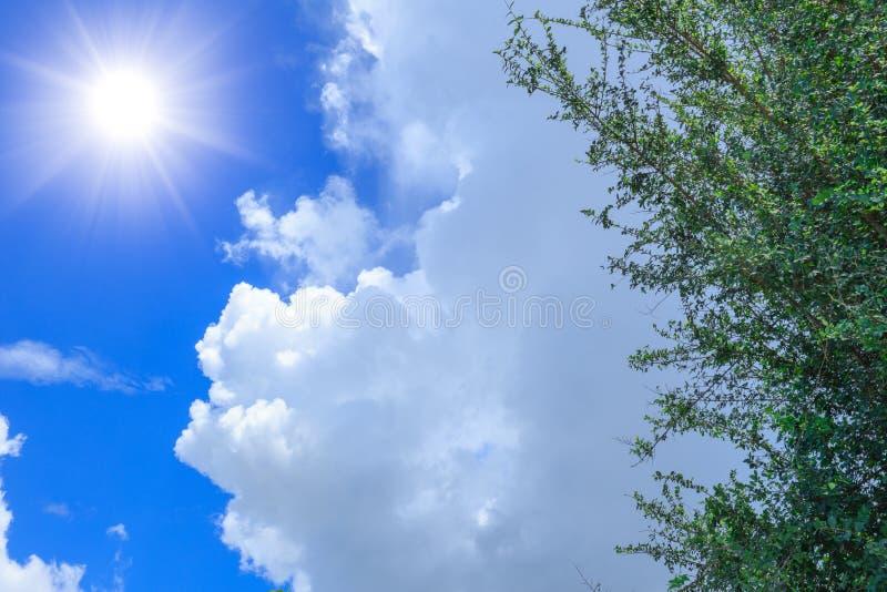 Дерево облака неба лета и солнечный день стоковые фотографии rf