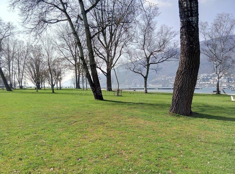 Дерево озера стоковые фото