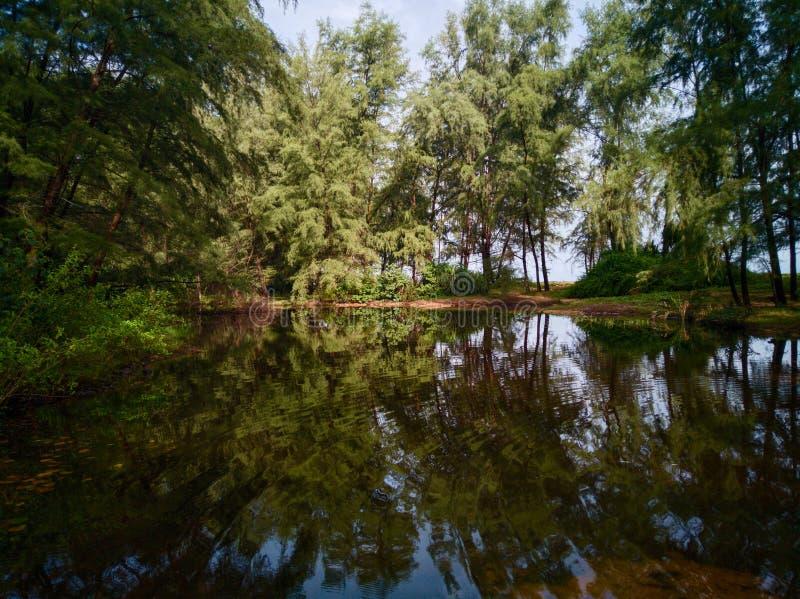 Дерево отражая в озере в Малайзии стоковые фото