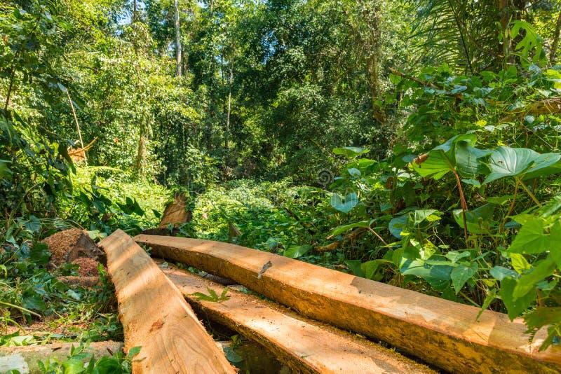 Дерево отрезанное вниз в дождевом лесе Азии отрезало вверх в длинные блоки тимберса стоковое фото rf