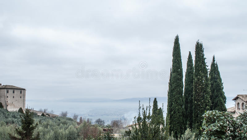 Дерево от Assisi стоковая фотография
