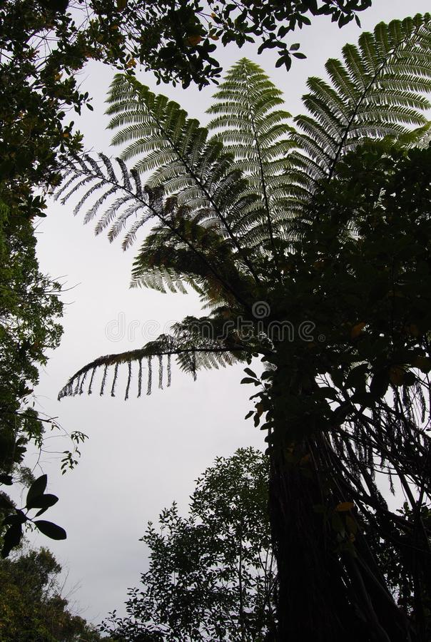 Дерево папоротника стоковое фото rf