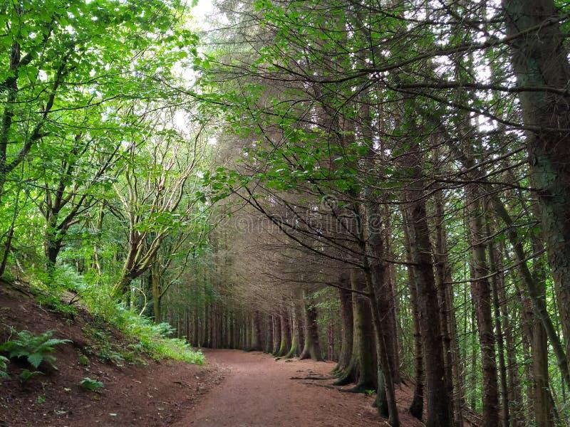 Дерево парка страны Chatelherault выровняло путь стоковое фото