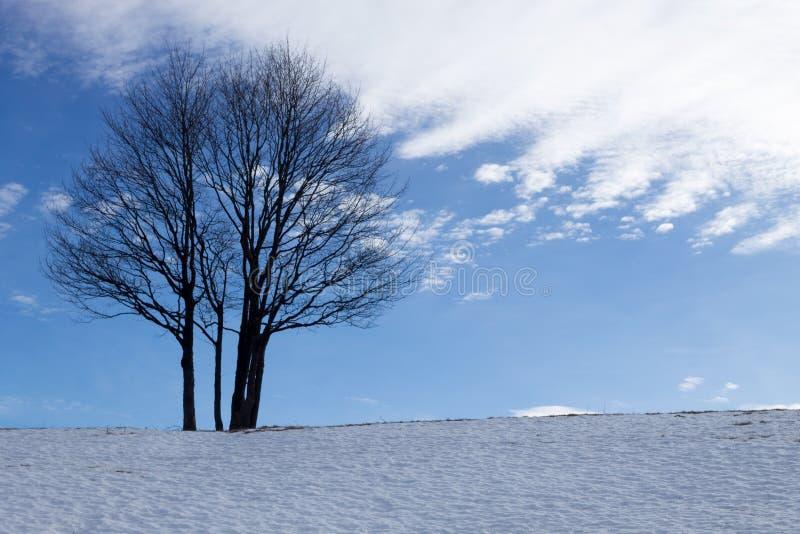 Дерево пасьянса в сезоне зимы, предпосылке природы стоковое изображение rf