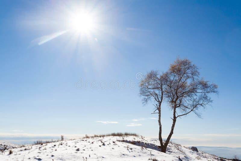Дерево пасьянса с солнцем ландшафта часы зимы сезона стоковое фото
