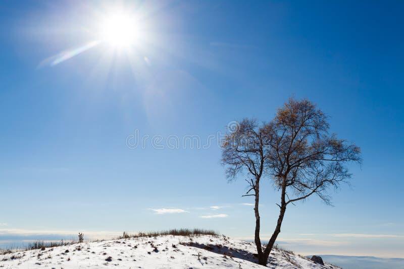 Дерево пасьянса с солнцем ландшафта часы зимы сезона стоковое изображение