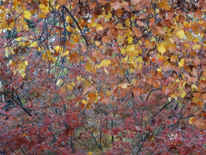 Дерево падения выходит цвета зимы лист стоковое фото