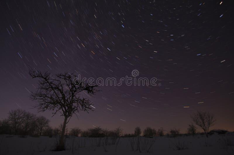 Дерево под небом зимы звёздным стоковые изображения