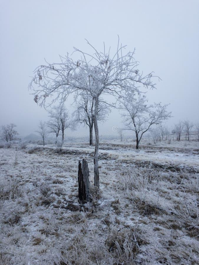 Дерево под снегом в зиме стоковая фотография rf