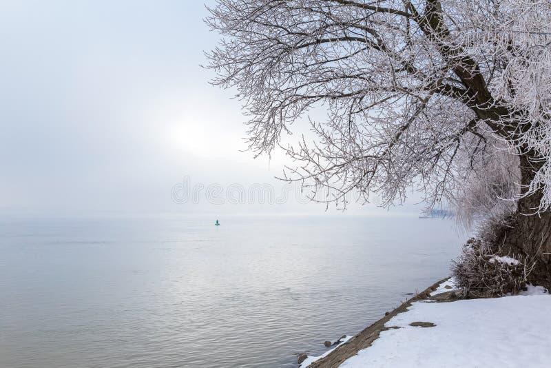 Дерево покрытое с снегом около реки стоковые фотографии rf