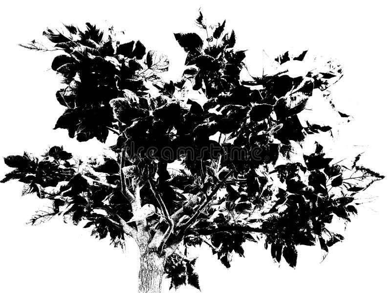 Дерево порога стоковое изображение