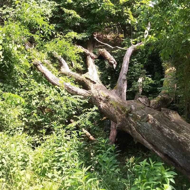 Дерево после тяжелый затоплять стоковая фотография
