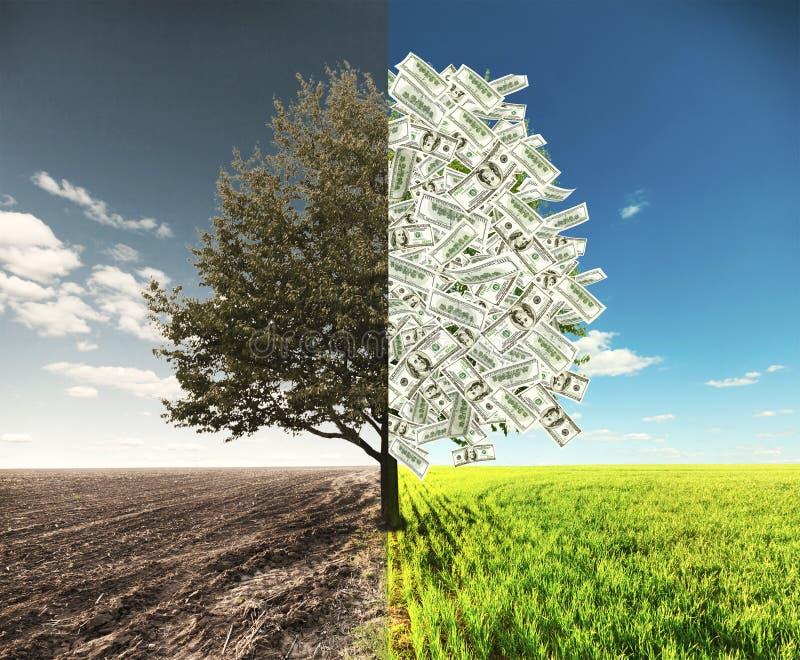 Дерево поля и денег стоковые фото