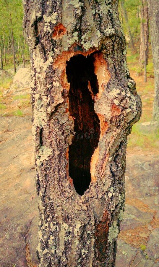 Дерево премудрости стоковое фото rf