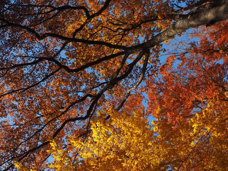 Дерево, природа, осень, лист