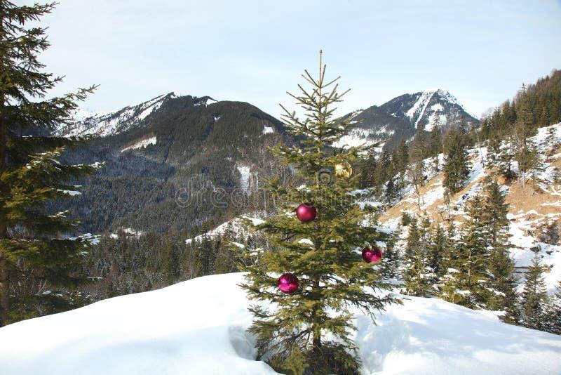 Дерево природы стоковая фотография
