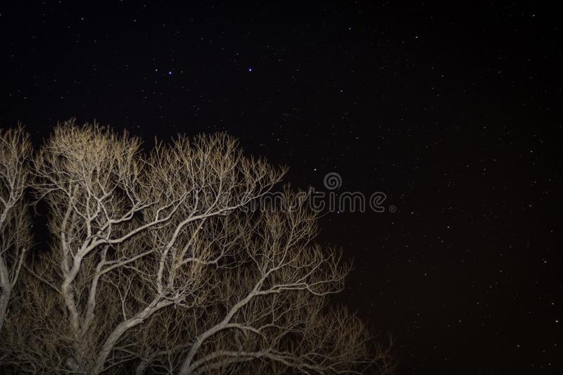 Дерево против звездной ночи стоковые изображения rf