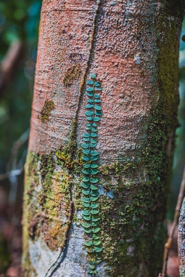 Дерево плюща взбираясь стоковые изображения