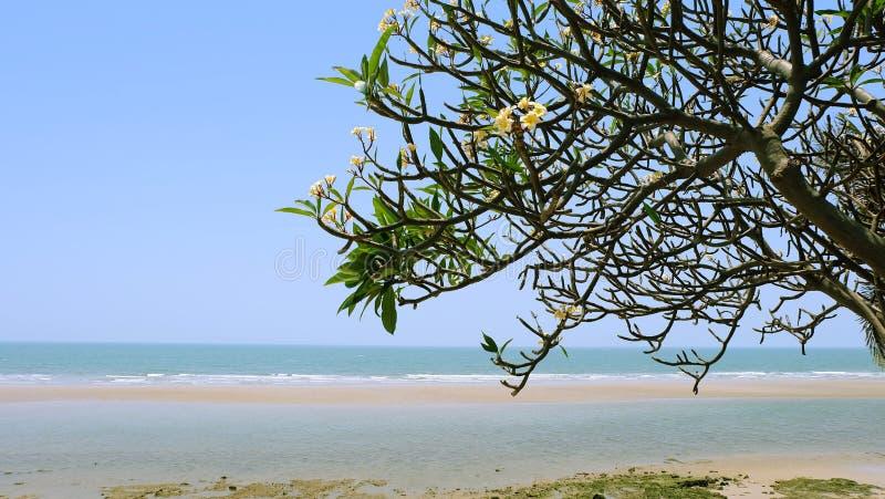 Дерево пляжа бортовое стоковое изображение rf