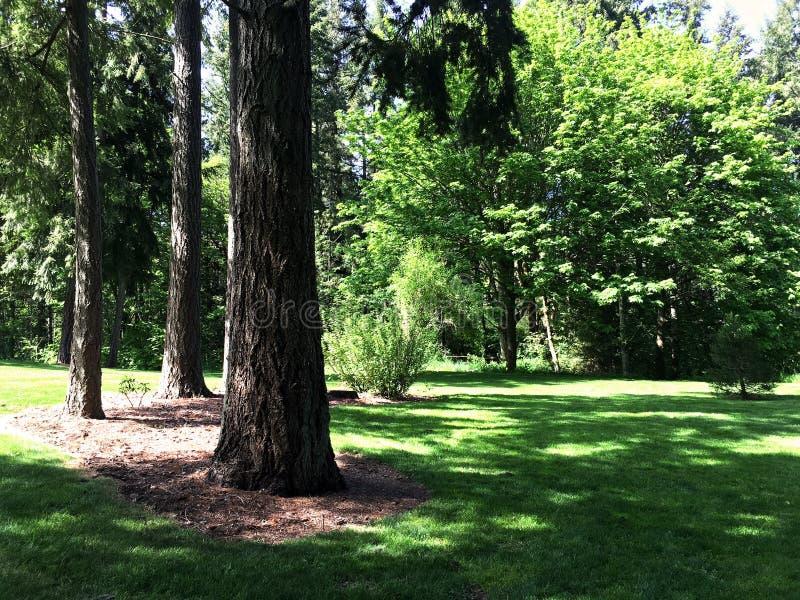 дерево растительности стоковое фото rf