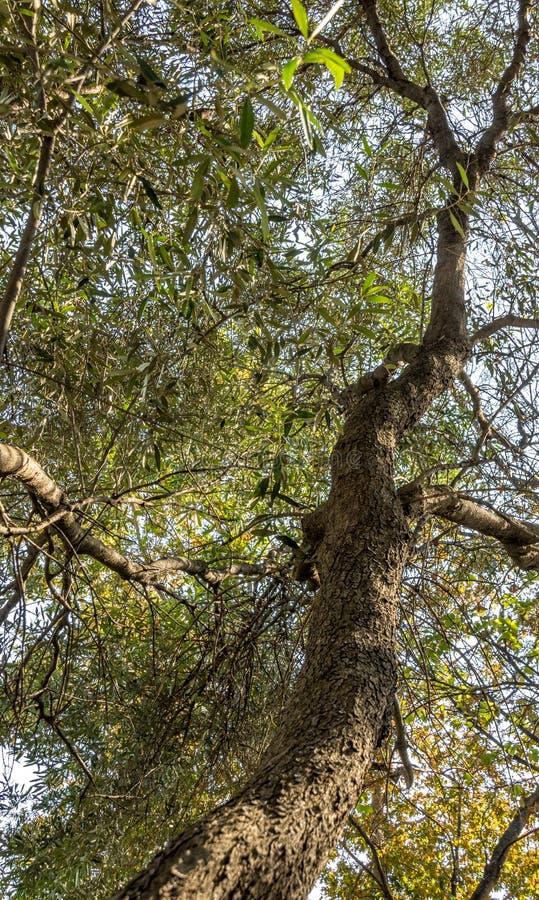 Дерево растя вверх к свету стоковое фото